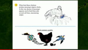 pidgeon_revival_plan2