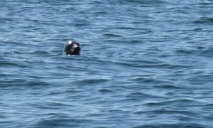 seal_small
